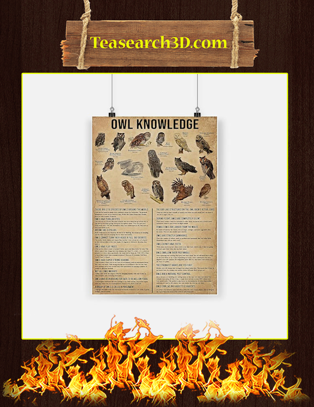 Owl Knowledge Poster - A2