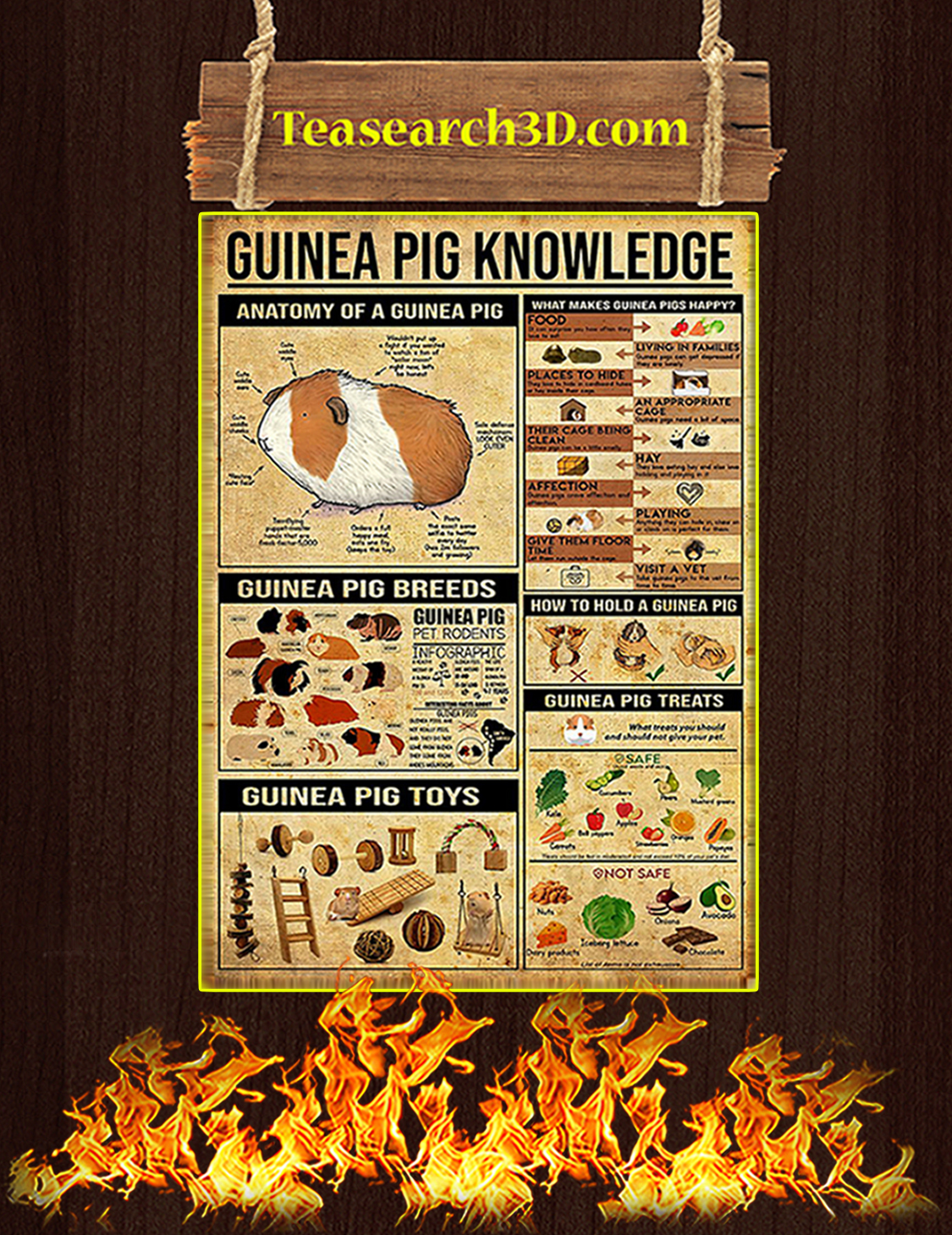 Guinea pig knowledge poster A3
