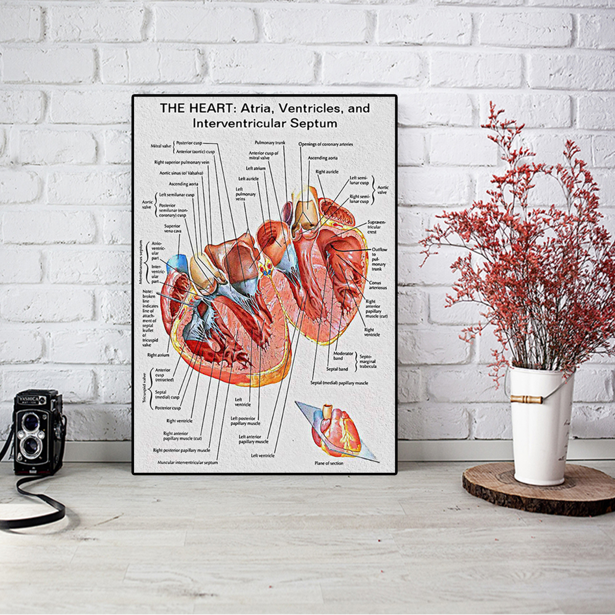 The heart knowlege cardiologist poster A1