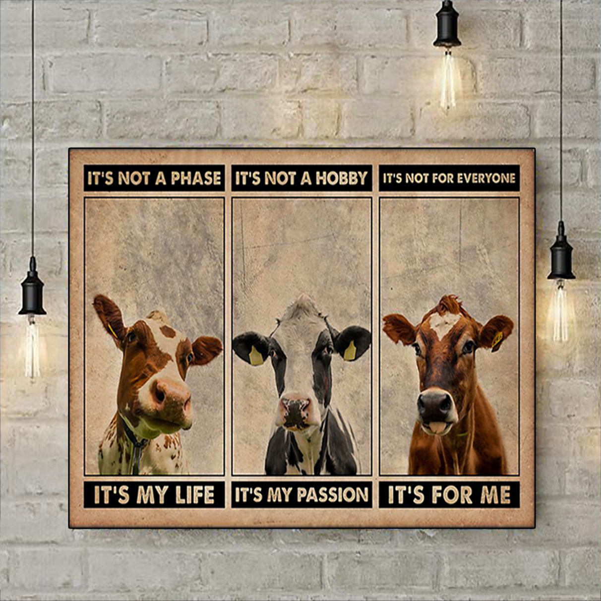 Cattle it's not a phase poster A2