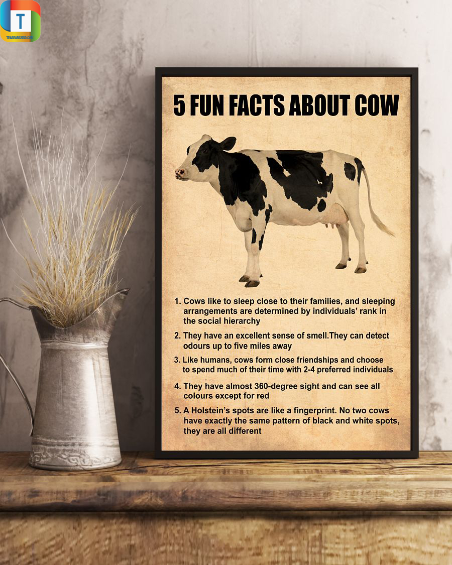 5 fun facts about cow poster 2