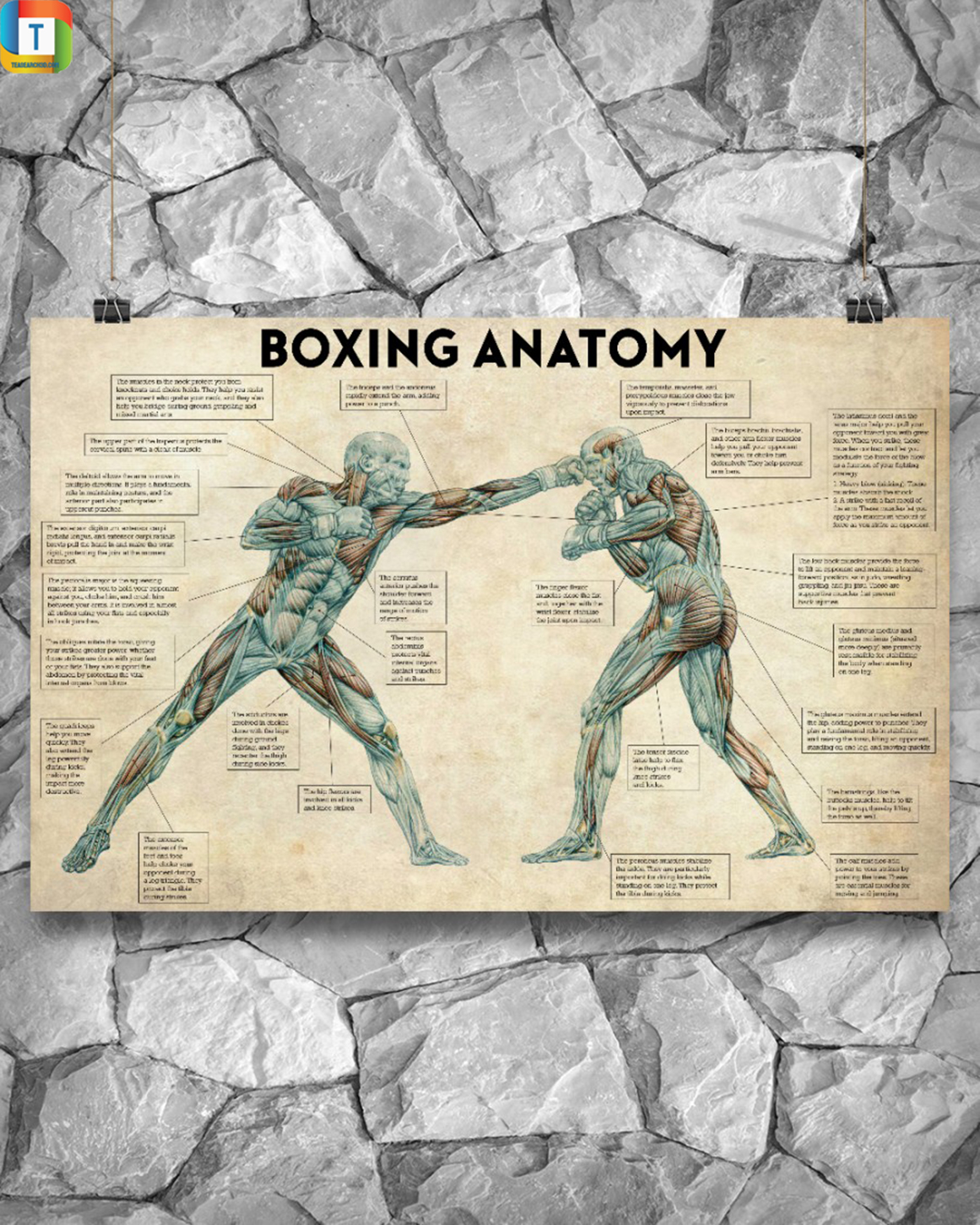 Boxing Anatomy Horizontal Poster 2