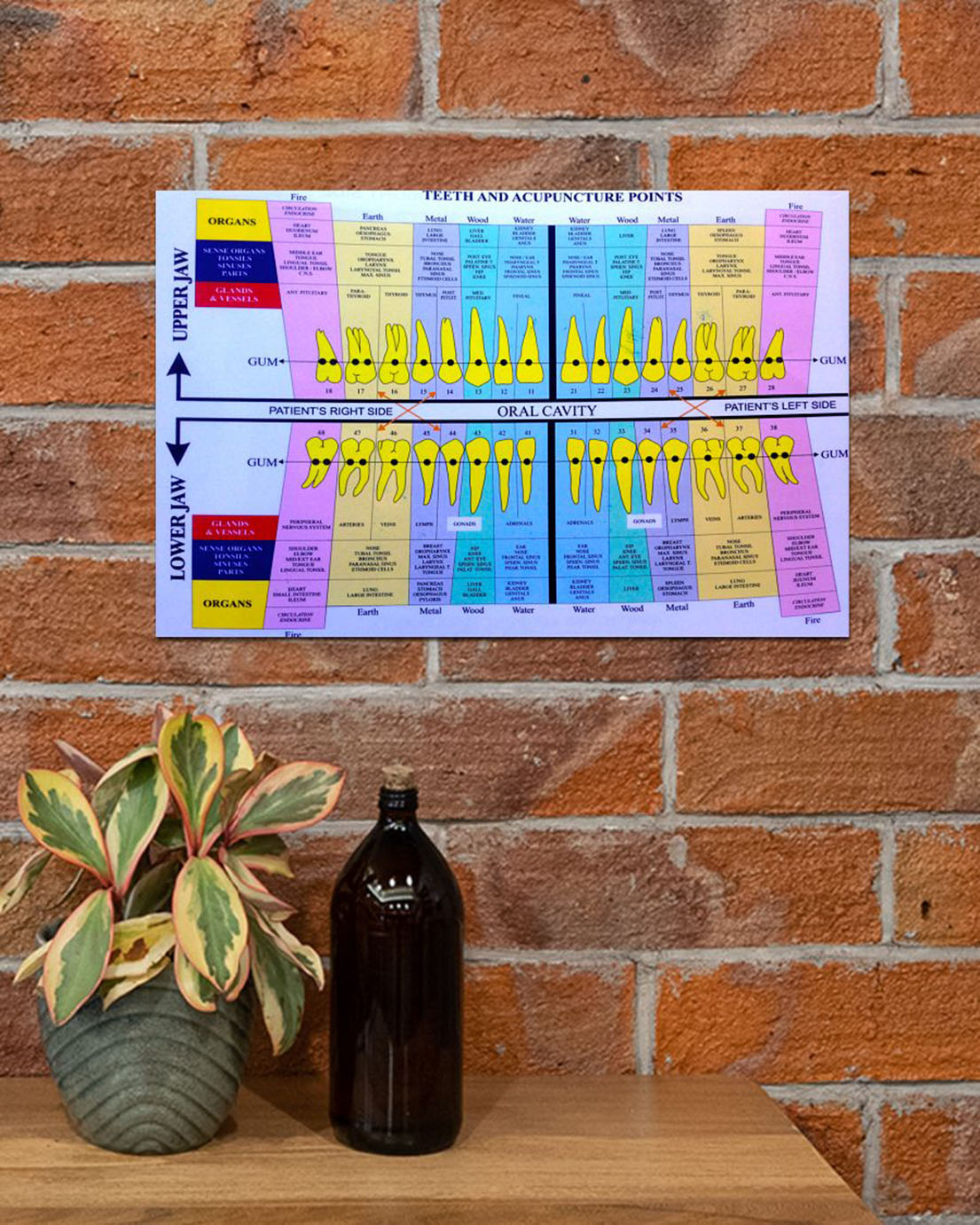 Dentist teeth and acupuncture points poster